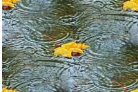 октябрский дождь