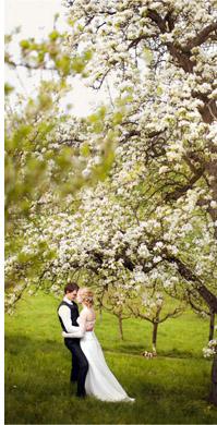 фото свадьба в апреле