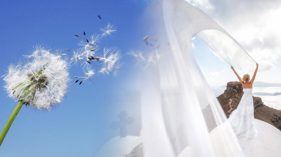сильный ветер на свадьбе