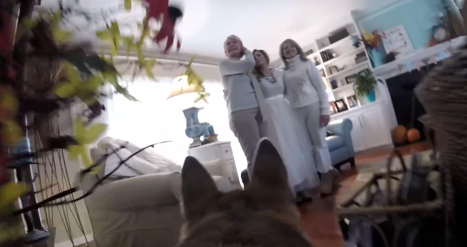 как собака умеет снимать