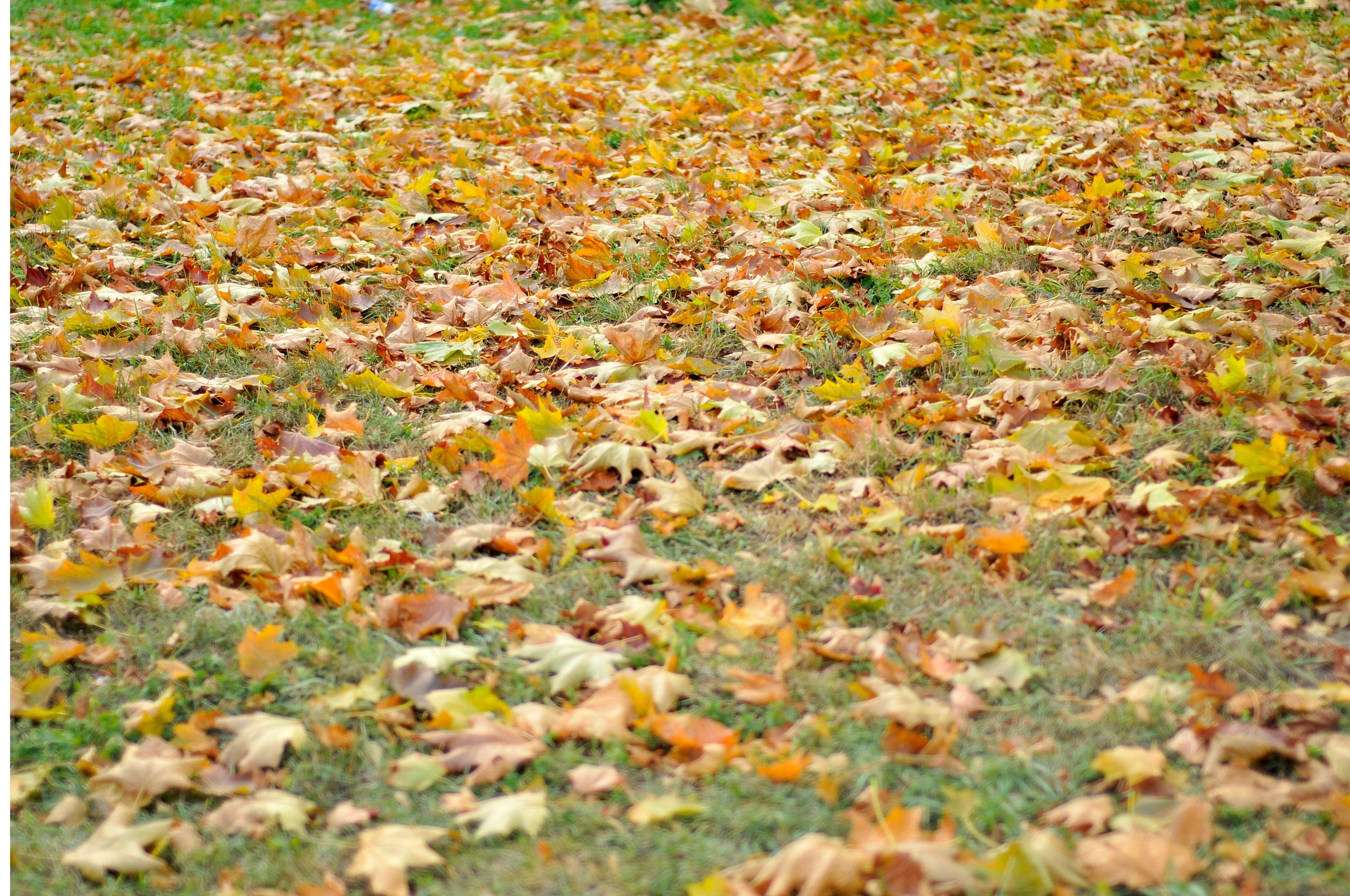 листва в сентябре