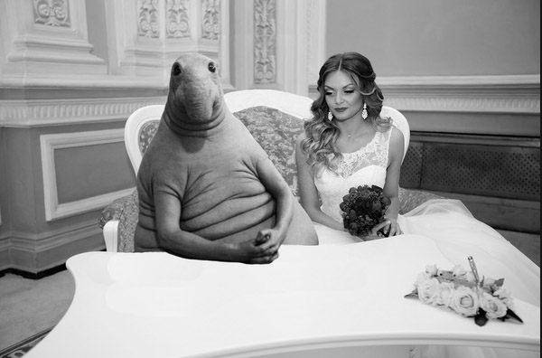 ждун и свадьба